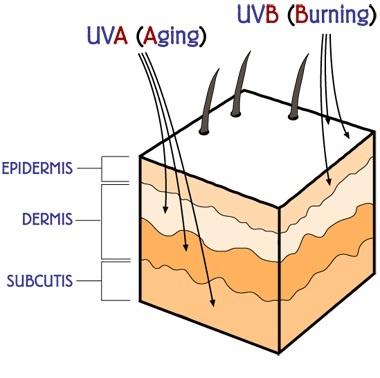قدرت نفوذ UVA در پوست بیشتر است